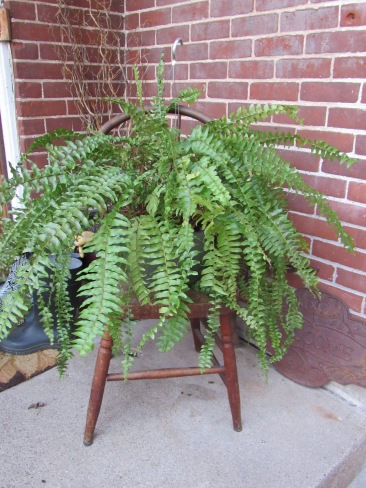 Fern plants (6 avail) w/ optional chair stand (2 Avail)